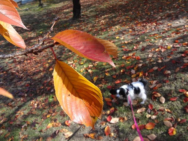 葉っぱのアップ