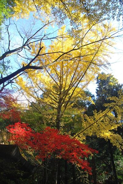 虚空蔵菩薩殿の紅葉