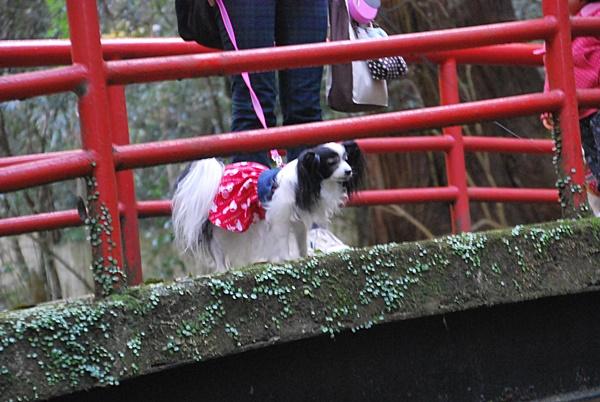 赤い橋から覗くルビー