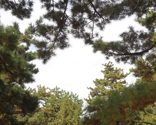 木の枝のフレーム見っけ