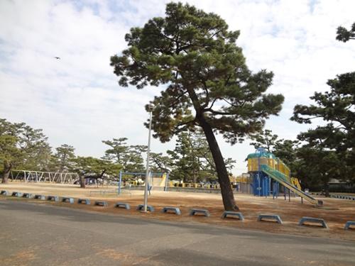 遊具広場のバランス松の木