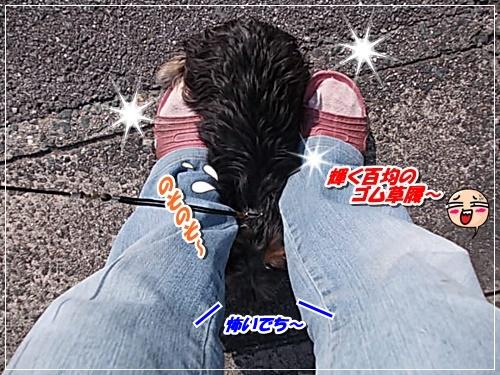 DSCN8264.jpg