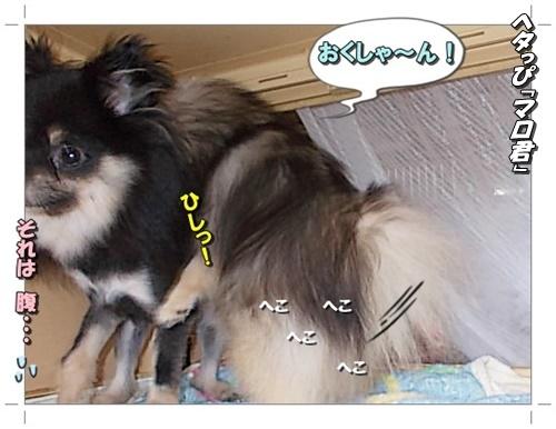 shima_2014101015051452b.jpg