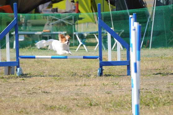 2013年11月16日 横須賀競技会(N)172[1]