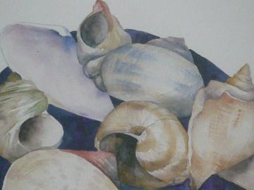 shell1-2.jpg