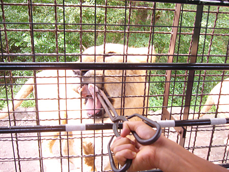 safaripark5.jpg