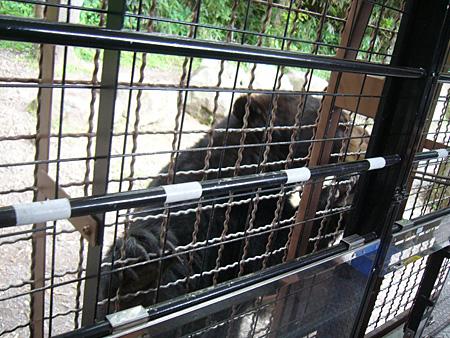 safaripark6.jpg
