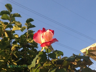 IMG_6856-2.jpg