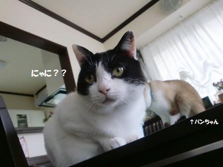 CIMG7213 - コピー