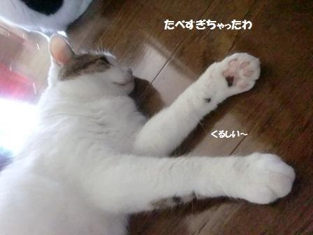 CIMG7922 - コピー
