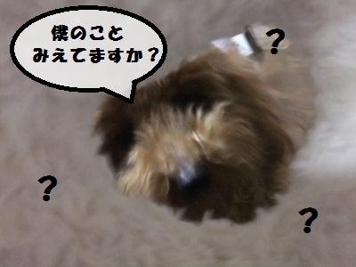じゃーきー2