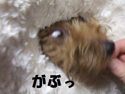 じゃーきー3