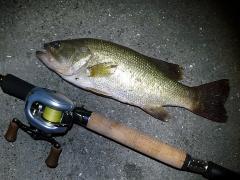 bass35-2_100717.jpg
