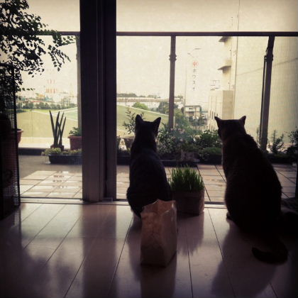 IMG_0048お外眺める