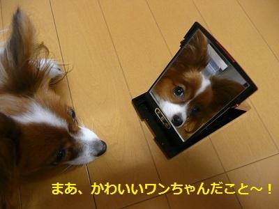 P10700331.jpg
