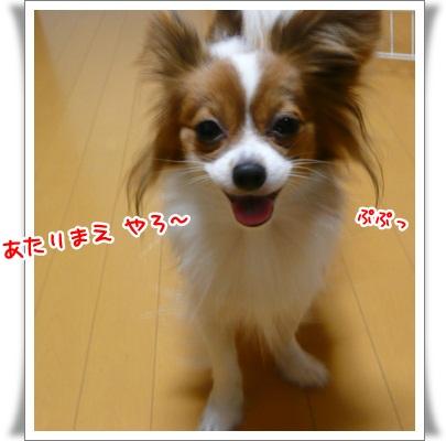 P11206143.jpg
