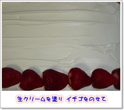 P11902552.jpg