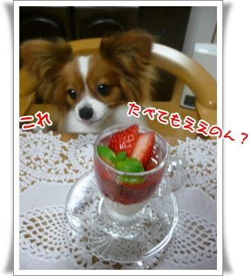 P12105792.jpg