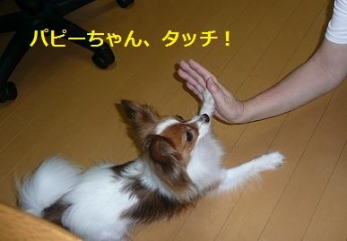 P201107181.jpg