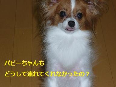 P2011072321.jpg