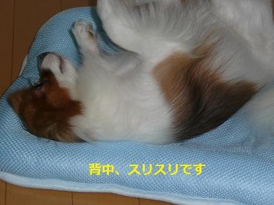 P20110727221.jpg