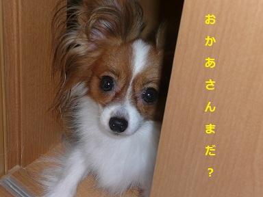 P2011082105.jpg