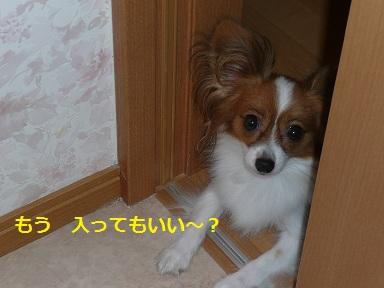P2011082107.jpg