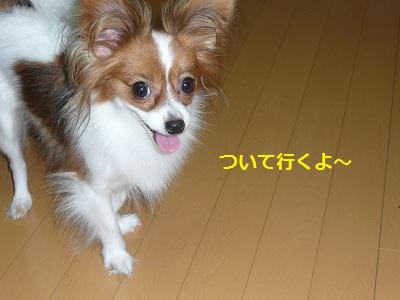 P2011082118.jpg
