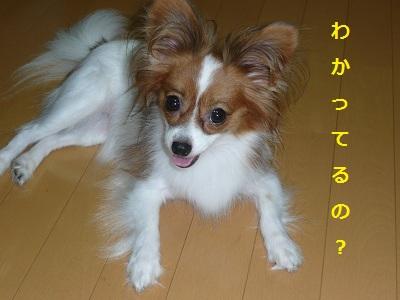 P2011082121.jpg