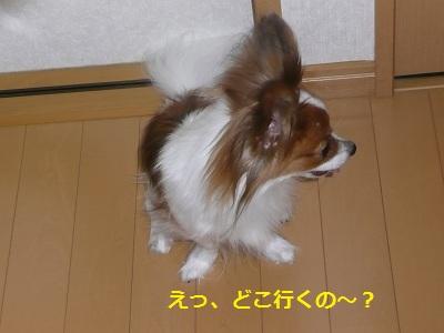 P2011082123.jpg
