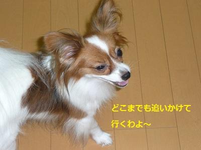 P2011082128.jpg