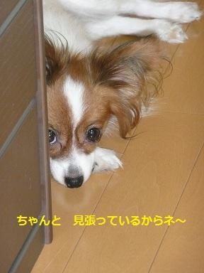 P2011082131.jpg