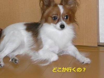 P2011082135.jpg