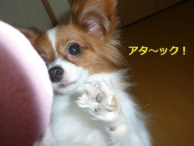 P2011083125.jpg
