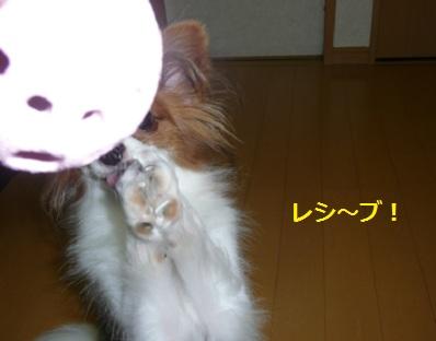 P2011083128.jpg