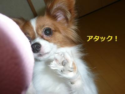 P2011083131.jpg