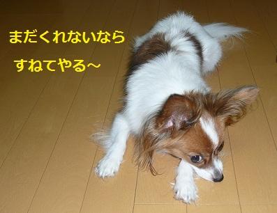 P2011090742.jpg