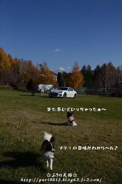 DSC_0325_20131203152125c50.jpg