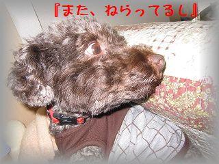 IMG_0044_20110320204931.jpg