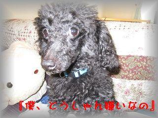 IMG_0379_20110310200819.jpg