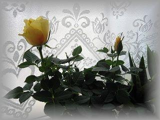 IMG_1066_20110406191204.jpg