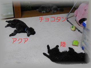 IMG_4543_20101019194041.jpg