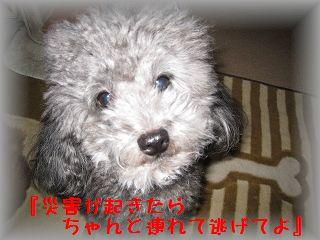 IMG_7019_20110315213644.jpg