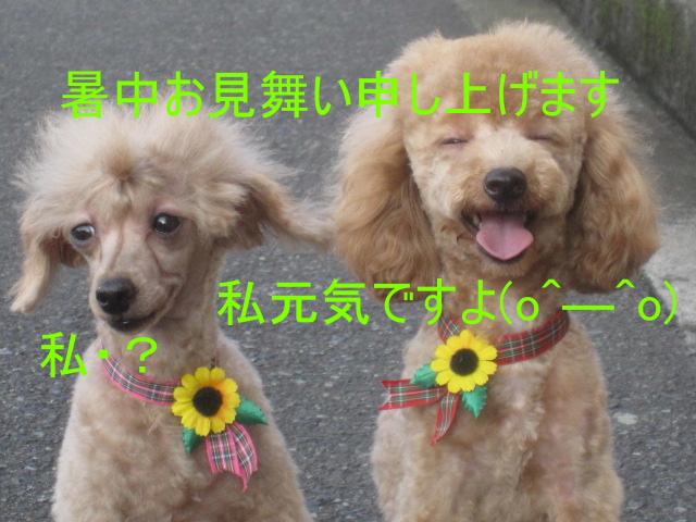 IMG_4335.jpg