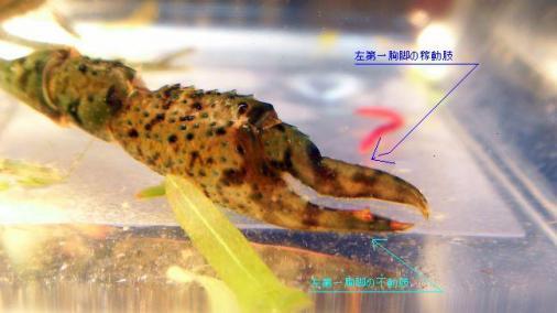 ザ利2010-09-24 (2)a