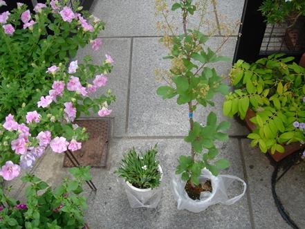 善通寺フラワー&ガーデンフェスタ2011