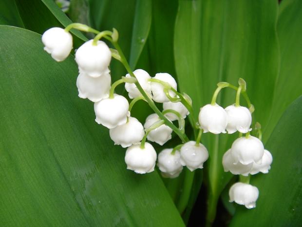 五月の庭花