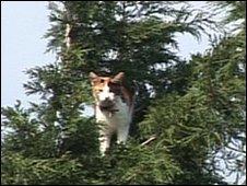 木の上のミリーちゃん