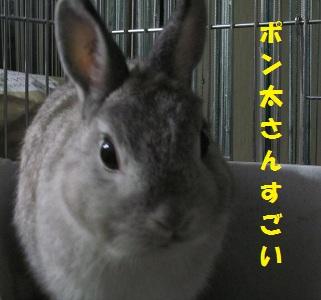 20111202NDCC28.jpg
