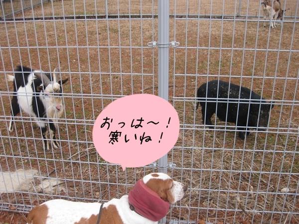 01_いのしし